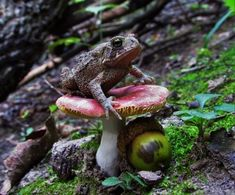'Toad stool ' by mobes Cutest Animals On Earth, Cute Animals, Frog Or Toad, Cute Funny Pics, Frog Pictures, Fantasy Forest, Cute Frogs, Reptiles And Amphibians, Biomes