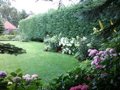 Ogród dla niecierpliwych. Rośliny szybkorosnące - Deccoria.pl
