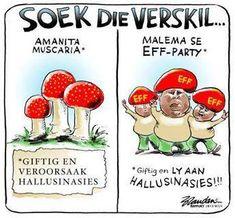 Juju .... Ek weet nie wat om te maak van hierdie man nie? Aan die een kant, as hy stemme van die ANC wen, versterk dit die DA. Te veel stemme, en ons land verval in anargie...kyk wat sê The Public News Hub vandag: These voters are jobless, disgruntled and disillusioned with the state of affairs in the country, 20 years post-independence and are the same people who Julius Malema was wildly popular with as the President of the Youth League. Young people make a difference when they vote, the…