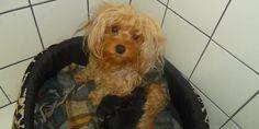 Cachorrinha desaparecida - http://projac.com.br/noticias/cachorrinha-desaparecida-2.html