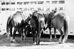 St Paul Rodeo - Kirstie Marie Photography