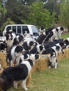 A Sheep Nightmare
