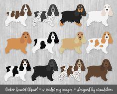 Cocker Spaniel Clipart. 12 hand drawn color variations. #cockerspaniels #spanielclipart #gundogs #englishcockerspaniel #dogclipart #petclipart #englishdogbreeds #englishdogs #sportingdogs #dogillustration