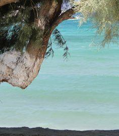 A shady grove at Palm Beach on Paros.