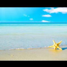 Beach #seashell #ocean