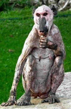 This is a hairless baboon and also your new worst nightmare. This is a hairless baboon and also your new worst nightmare. Ugly Animals, Scary Animals, Unusual Animals, Animals And Pets, Cute Animals, Strange Animals, Ugliest Animals, Shaved Animals, Beautiful Creatures