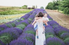 lavender fields, photo, kids