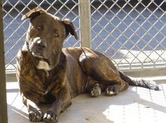 10/12 STILL THERE!!! Stunning dog homeless after 'too busy' owner surrendered him to CARSON, CA facility