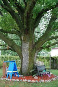 Emerald Ash Borer Clinton MI   ash tree http://www.savetheash.com/
