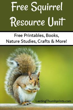Everything you need to help you learn about squirrels! Free printables, books, crafts, and more!