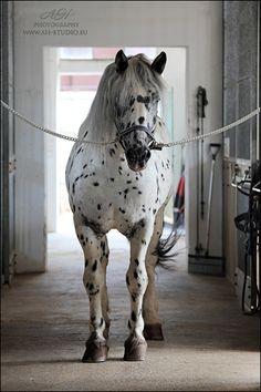 Pferdezucht-Austria #pferd