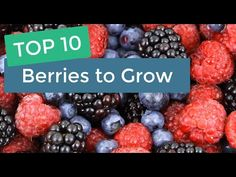 Welcome to Agriculture Academy, where we show you how to start a profitable business in agriculture. Berries are a high value crop that produce nutritious, d. Fruit Box, New Fruit, Fresh Fruit, Blueberry Store, Delicious Fruit, Yummy Food, Veggie Box, Fruit Company, Dvb T2