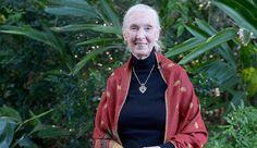 Jane Goodall: Harambe The Cincinnati Zoo Gorilla Was 'Putting Arm Around The Child'
