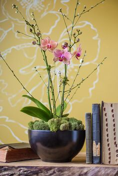 With a nice bowl, moss and some branches for support you can display your blooming phalaenopsis just as nicely as any interior designer.
