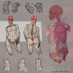 Anatomy art, gross anatomy, anatomy study, anatomy drawing, anatomy ref Human Anatomy Drawing, Anatomy Study, Body Anatomy, Gross Anatomy, Figure Drawing Reference, Anatomy Reference, Art Reference Poses, Hand Reference, Drawing Lessons
