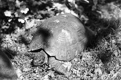 Tartaruga by Silvia Marras, via 500px