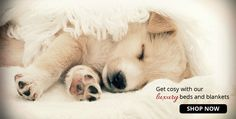 Get cosy with your pooch with one of our luxury dog blankets. Prices range from $25. Shop at www.purelypooch.com