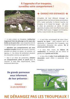 """Informations sur les """"Patous"""" (chiens gardant les troupeaux) 2/3"""