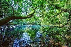 山形県遊佐町吹浦 丸池様  生まれ育った故郷にある神秘の池。鳥海山大物忌神社の神域で、動植物の採取は禁止されています。子供の頃は、そんな事も知らずによくここにカブトムシやクワガタ捕まえに来てましたが( ̄▽ ̄;)(笑)  #LOVES_NIPPON #team_jp_ #team_jp_東 #tokyocameraclub #東京カメラ部  #Lovers_Nippon #icu_japan #igersjp #instagramjapan  #wu_japan #IG_JAPAN  #japan_daytime_view #写真撮ってる人と繋がりたい #写真好きな人と繋がりたい  #noitenoinstagram  #ptk_japan #山形県 #遊佐町 #吹浦 #丸池様 #神域 #鳥海山大物忌神社