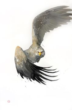 Karl Mårtens | WATERCOLOR | White Tailed Eagle