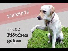 Hund GIB PFOTE Pfötchen geben beibringen in einer Minute lernen Kommando Hundeschule Hundetraining - YouTube