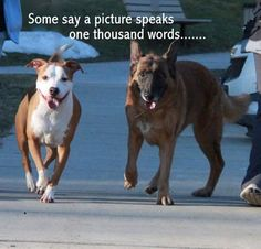 **FUREVER HOME NEEEDED!** Left abandoned in a condemned home, bonded dogs kept each other warm and safe