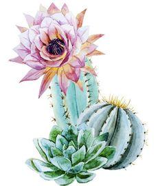 3d Frames, Bedroom Artwork, Cactus Art, Zentangle, Crafts For Kids, Cricut, Clip Art, Green, Plants