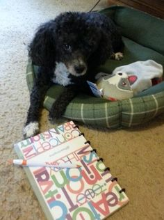 #resolutions #writing #blogging http://blogpaws.com/executive-blog/pet-parenting-health-lifestyle/cats-and-dogs/tis-the-season-to-reflect-and-plan-for-the-new-year/