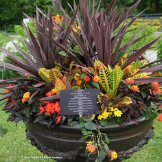 Paul Zammit - Who else could work such magic with wine, chartreuse and orange: crotons, lantana, 'Crimson Curls' heuchera, yellow bidens, 'Burgundy' oxalis and orange Sparks Will Fly Begonia boliviensis
