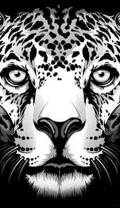 Jaguar - Bernard Salunga