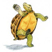 Dancing Turtle Google Search Tortoise Pictures Turtle Dance