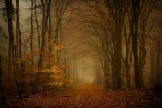 Wood B by Lars van de Goor