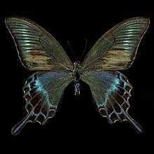 Fine Art for Sale Online Vanitas, Damien Hirst Butterfly, Butterfly Artwork, Art For Sale Online, Photo Art, Black And White, Prints, Pictures, Image