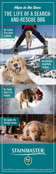 Not all heroes wear capes. This one wears a vest. Tremper is a search-and-rescue dog and full-time hero. Find out more about how he is an an ambassador for avalanche awareness.
