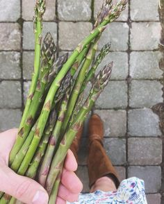 "476 Likes, 10 Comments - Jessica 🌻 (@cramerhomestead) on Instagram: ""A little Easter asparagus harvest. First of the season! 😋"""