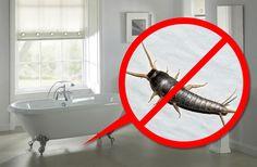 Silverfiskar har funnits i över 300 miljoner år och brukar dyka upp i hemmet, speciellt där det är lite fuktigt, som badrummet. Så här undviker du att få silverfiskar i hemmet.