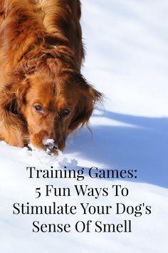 Playing training gam