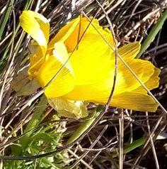 utimorzsák: Erdei meditációs terecske és  tavaszi hérics