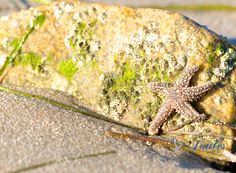 A personal favorite from my Etsy shop https://www.etsy.com/listing/209420194/stuck-on-you-beach-photos-starfish
