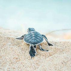 Follow the Baby Sea Turtle