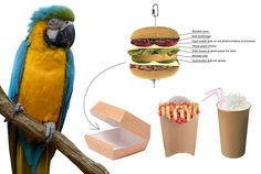 Concept about hamburger meal themed parrot toys.