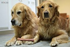The boys don't want to share their natural bully sticks from Raw Paws! Learn more about why bully sticks are a great alternative to rawhide!