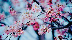 Resultado de imagem para frases sobre flores tumblr