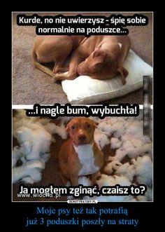 Moje psy też tak potrafią już 3 poduszki poszły na straty –
