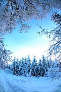 forest in winter by KariLiimatainen.deviantart.com on @deviantART