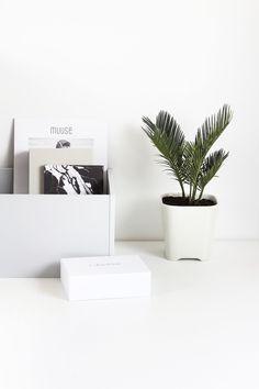 MyDubio / Mini palm plant // #Fashion, #FashionBlog, #FashionBlogger, #Ootd, #OutfitOfTheDay, #Style