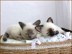 Needle felted sleeping Siamese kittens by Po*Pisolino of Japan