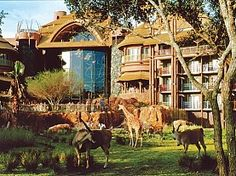 Disney's Animal Kingdom Lodge. Get details on location and amenities in Disney's Animal Kingdom Villas and learn about the lodge's African wildlife. Disney Resorts, Disney World Hotels, Walt Disney World, Disney Vacations, Disney Trips, Disney Parks, Hotel Disney, Dream Vacations, Orlando Disney