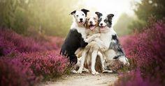 fotos preciosas de animales - Buscar con Google