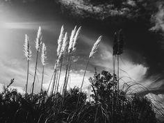 Black & white Toitoi's photo by Amanda Bransgrove Tiny Container House, Amanda, Landscapes, Black And White, Flowers, Inspiration, Art, Paisajes, Biblical Inspiration